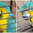 Escaped parrot scolds firefighter and flees