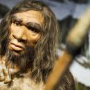 That is why Neanderthal has a big nose