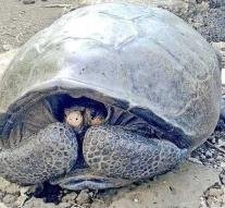 Already more than 100 years extinct giant tortoise is alive!