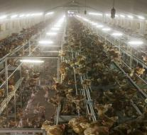 Another 92,000 chickens culled in Lower Saxony