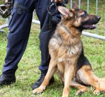 Cartel puts price on top Colombian drug dog