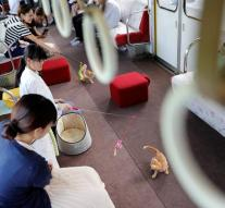 Cats welcome Japanese trainers