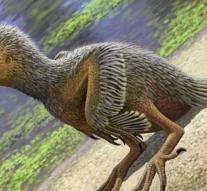 Chick of 127 million years old found