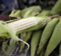Chinese caught steal 'high tech corn seed'