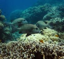 Concerns about fatal incidents Barrier Reef
