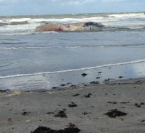 Dead whale washed up on the Razende Bol