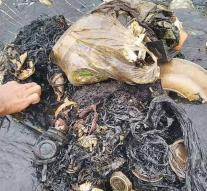 Dead whale washes with a thousand plastic objects in the stomach