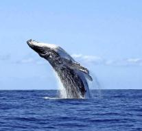 Diver swallowed by whale: 'No time for fear'