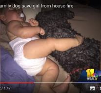 Dog gives life for baby