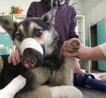 Dog paws and nose chopped off