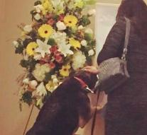 Dog says goodbye to his deceased owner