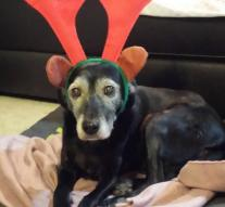 Dog with Santa hat is animal cruelty