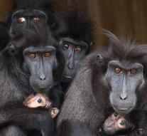 Family monkeys spontaneously poses for photographer
