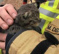 Firefighter adopts kitten after fire in port