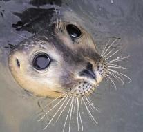 Fisherman rescued from cliff after attack seals