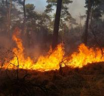 Forest fires ravage dry north Spain