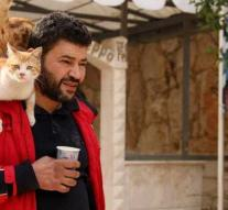 In devastated Aleppo, one citizen still has an eye for cats