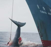 Japan gets out of committee and resumes whaling