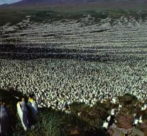 Largest colony of king penguins shrunk by 90 percent