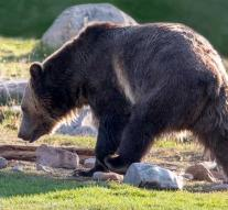 Mother and baby in Canada killed by bear