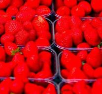'Needle sample' worked with strawberry grower