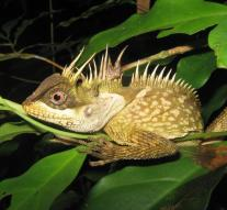 New animal and plant species discovered in Asia