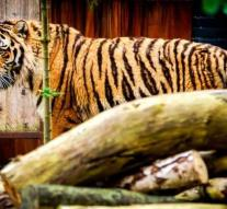 Number of wild tigers in Nepal almost doubled