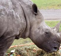Oldest rhino in the world deceased