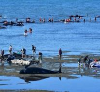 Pilot whales save himself