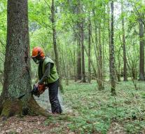 Poland continues with logging despite EU ruling