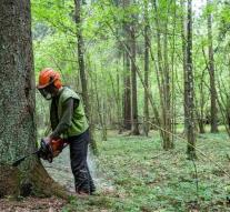 Poland has to stop cutting down in Europe's last primeval forest