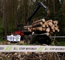 Poland has to stop cutting of forests