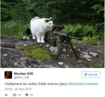 Police thanks twitterers for cat photos