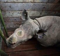 Seven rare rhinos died after relocation