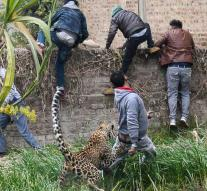 Spectacular images: leopard attacks neighborhood