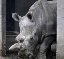 Stem cell technology has to save white rhino