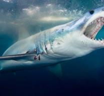 Swimmer badly injured by shark attack