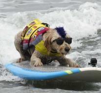 These dogs can surf better than you