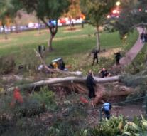 Tree falls on wedding guests: 1 dead