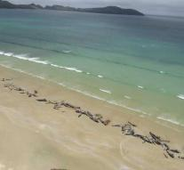 Whales washed ashore in New Zealand