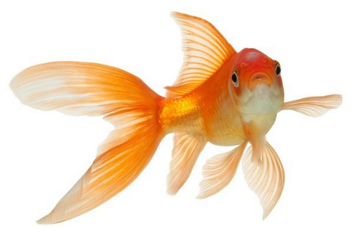 Hotel Hires Goldfish For Lonely Guests Hot Recent News